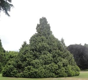 christchurch-botanical-garden-tree