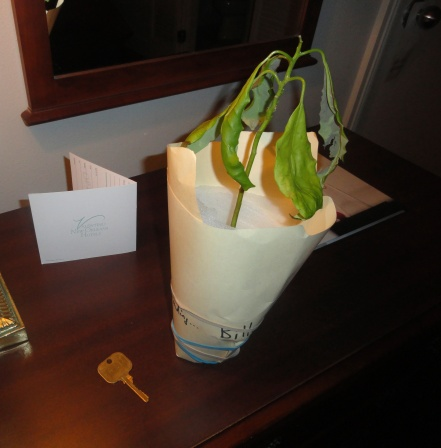 new-orleans-hotel-st-marie-avocado