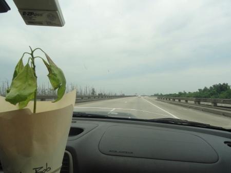 on-the-bayou-billy-bob-avocado