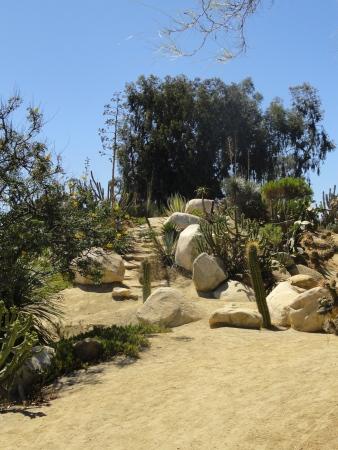 balboa-park-cactus-garden