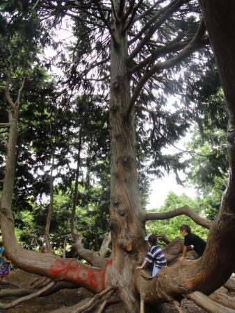 christchurch-botanical-gardens-tree-climbing