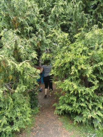 christchurch-botanical-gardens-tree-inside