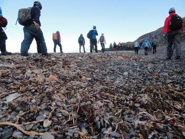 hiking-beach-kelp