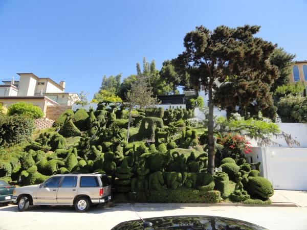 san-diego-bushes