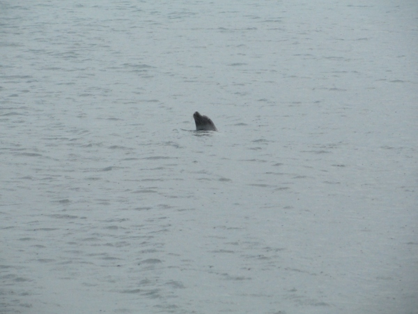 svalbard-seal