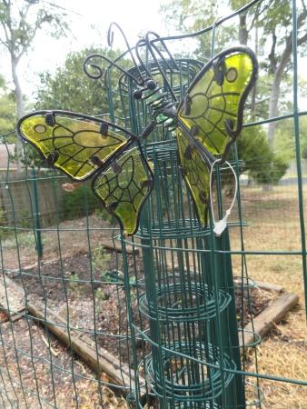 garden-butterfly