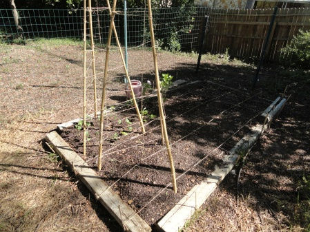 homemade-trellises-bean-sprouts