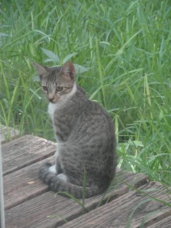 kitten-on-back-deck