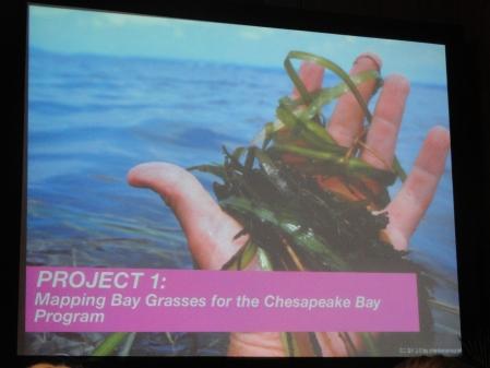 mapping-chesapeake-bay-grasses-stamen