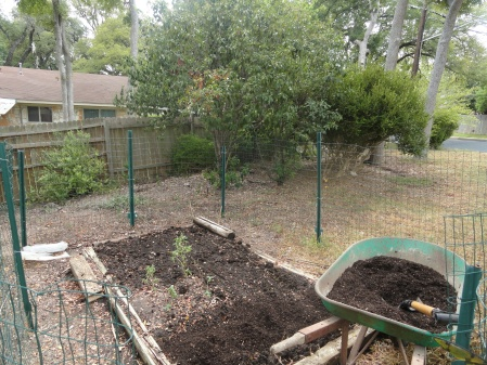 spreading-homemade-compost-preparing-vegetable-garden