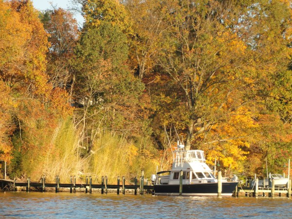 changing-leaves-autumn-saint-leonard-creek-maryland
