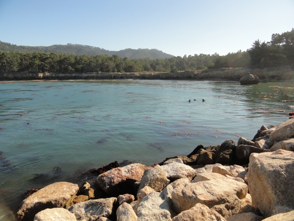 whalers-cove-point-lobos