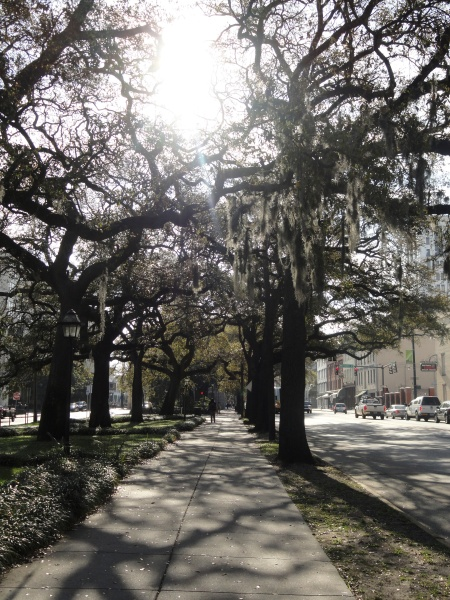 spanish-moss-streets-of-savannah