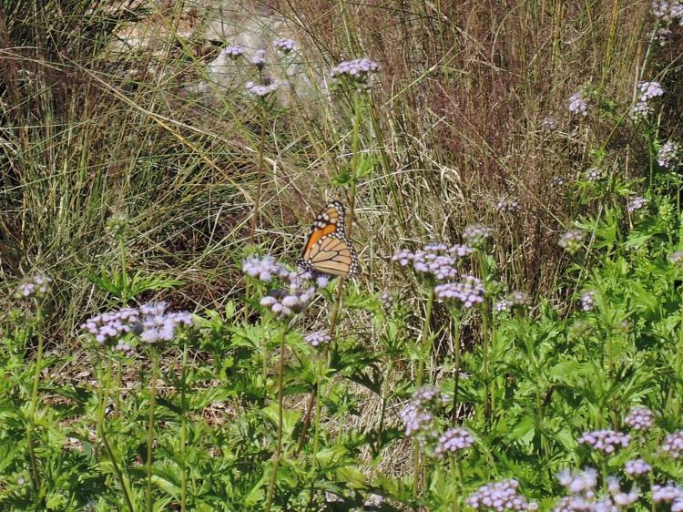 lbj-wildflower-center-nectar-garden
